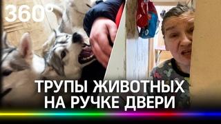 Уфа. Животный каннибализм в квартире: хаски грызут кошек. Хозяйка оставляет трупы животных на ручке двери