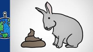 Почему животные едят свой кал? [MinuteEarth]