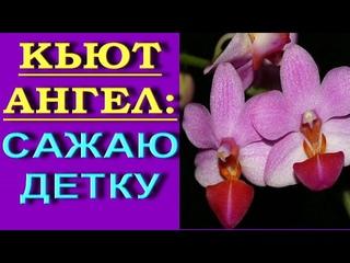 КРОШЕЧНАЯ орхидея:ОТДЕЛЯЮ,сажаю,РЕЗУЛЬТАТ.Детки орхидеи на пеньке.
