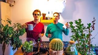 Mr. Belt & Wezol Room #62 (Plant Edition)