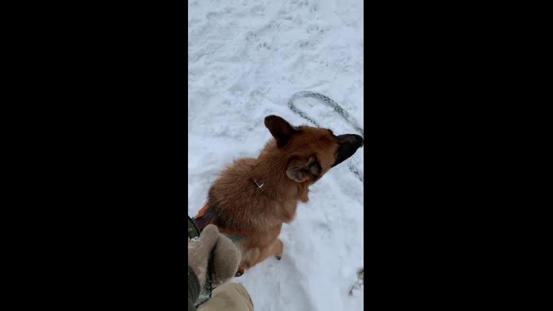 Лев Буряк раскусывание собаки с определенной степенью неуверенности