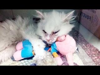Люди были в шоке, когда узнали что сделал этот кот, после того как его бросили хозяева!