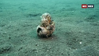 «Дикий мир океана: Индонезия» (Познавательный, природа, животные, путешествие, 2020)
