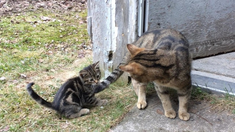 Kitten is punished after chasing mommy s tail cute