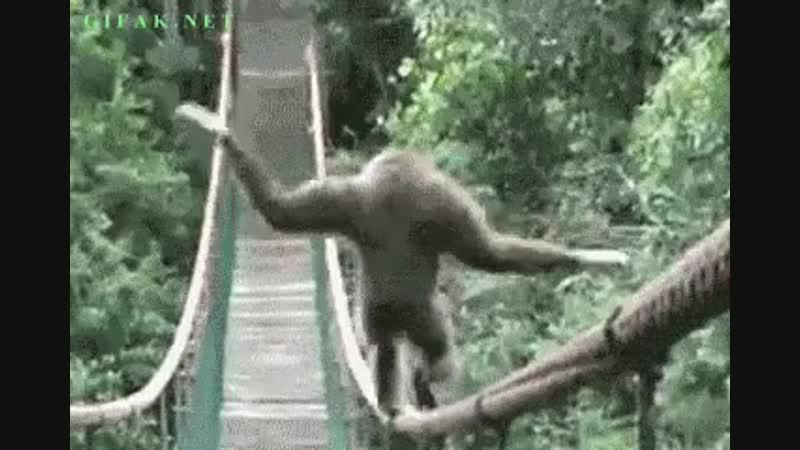 гиф обезьяны прикольные гербах, сейчас