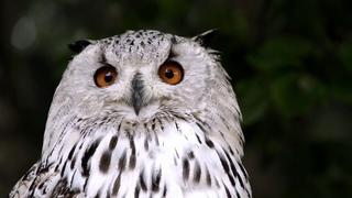 Энциклопедия птиц - познавательное видео для детей и их родителей / Encyclopedia of birds.