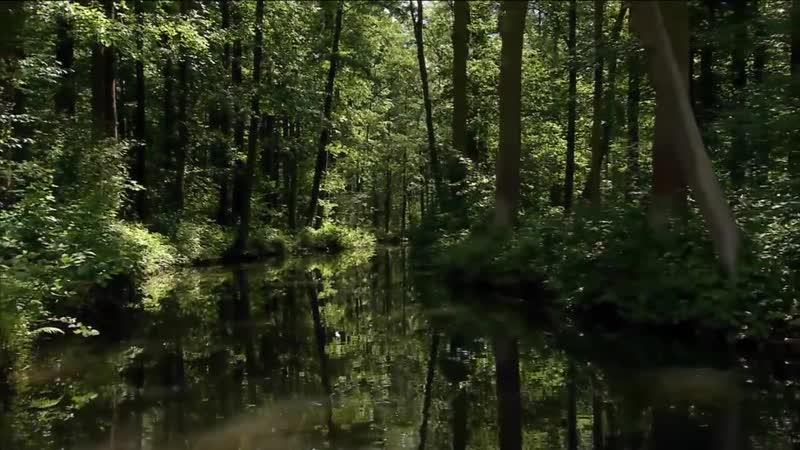 Дикая природа Германии Леса реки Шпрее