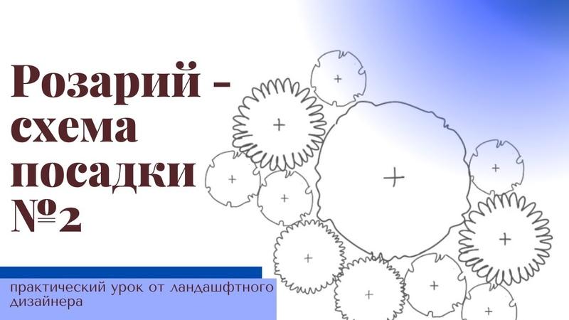 Схема посадки розария в бело голубой гамме Практический урок от ландшафтного дизайнера