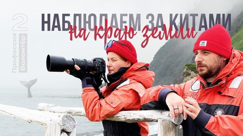 В поисках серых китов Профессия волонтёр 2