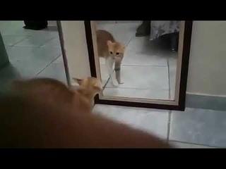 Кот и зеркало😂😂😂👍 аж обосрался 🤣🤣🤣