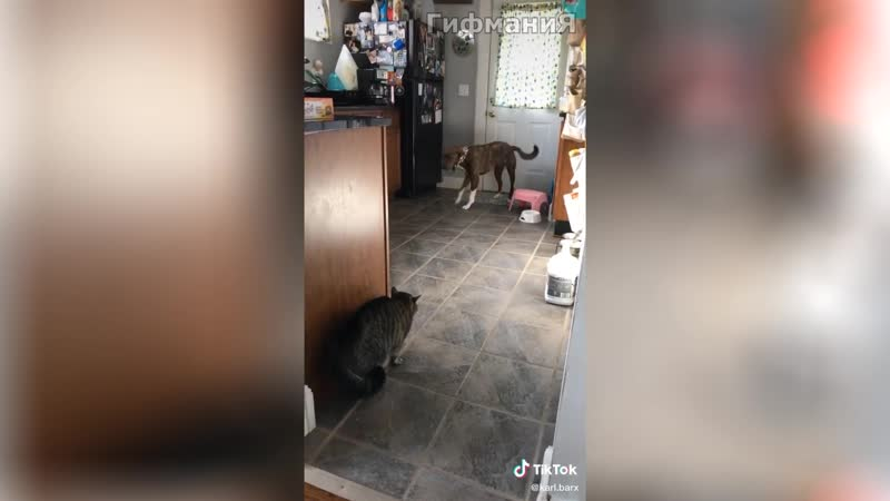 Кот в своём репертуаре Смешные видео