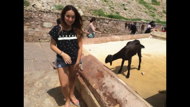 ДЖЕЙРА 1 По дворцу бегает целое стадо коз и они проходят без билетов Вожак нашёл пролом в стенетене