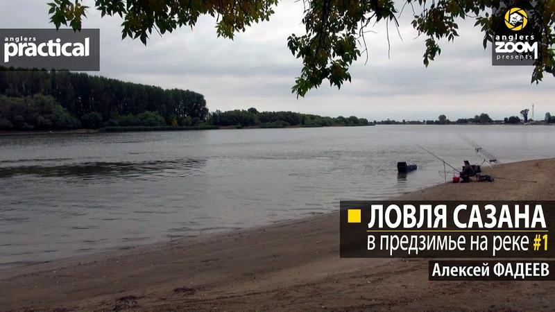 Ловля сазана в предзимье на реке Алексей Фадеев Часть 1