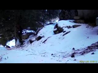 Снежные барсы в Казахстане