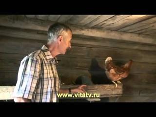 Доктор Попов: Лечение простатита яйцом | Source