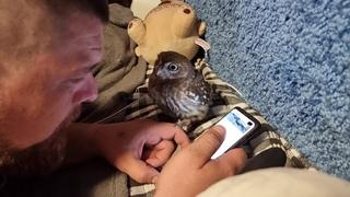 Совёнок Лучик vs тюлень Артём выбирают, что смотреть в телефоне и во что играть