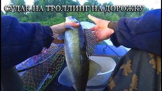 Ударил мотор об бревно. Ловля судака на дорожку. Троллинг на реке. Рыбалка на судака и щуку.