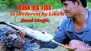 Liba H. burning big fish