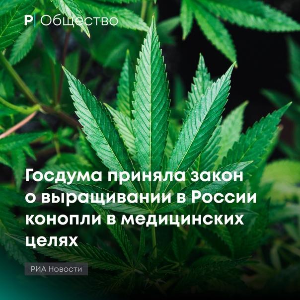 Конопли запрете закон о бесплатно марихуана