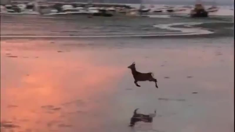 We interrupt your regularly scheduled doomscrolling to bring you a joyful deer prancing ac