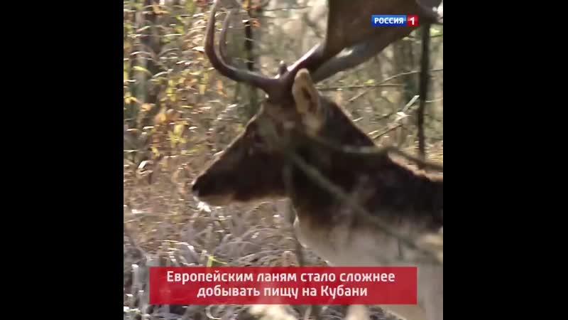 Ланям стало сложнее добывать пищу Белореченск