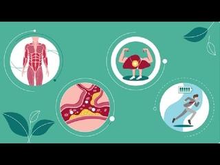 Биологически активная добавка к пище БАД «Гипурхол»