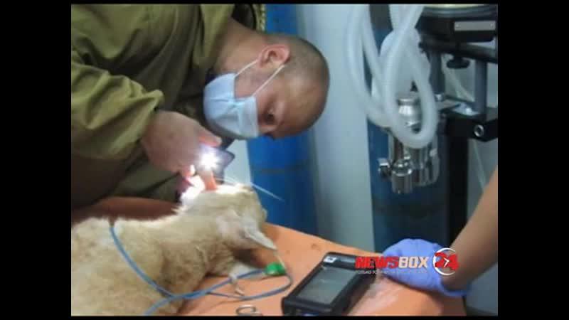 Двух рысей выпустили в дикую природу в Приморском центре спасения животных