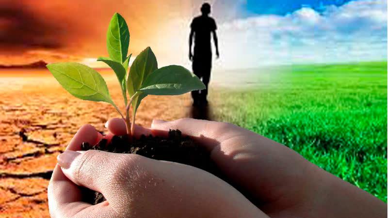 🐛 Дождевые черви дендробена и старатель это ваше плодородие Секреты хорошего урожая это вермиферма