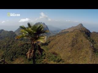 Дикая природа Таиланда / Страна красот и удивительных контрастов