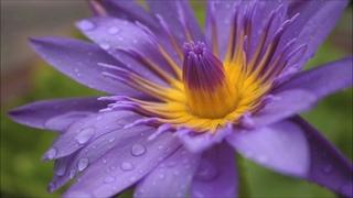 Прекрасная музыка, согревающая сердце и душу! Послушайте!!! Дождь и солнце...