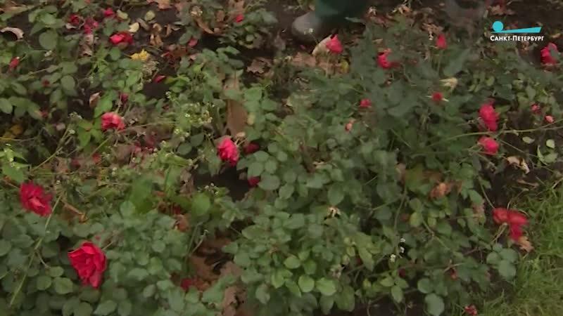 Как готовят к зиме Александровский сад