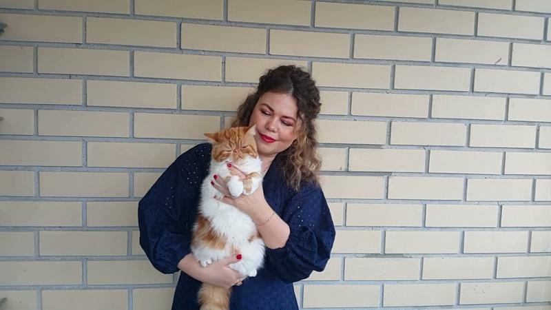 Конкурс 18 №261 Афина Экзот Кэт 7 мес для 2 й выставки кошек по системе РФО он лайн