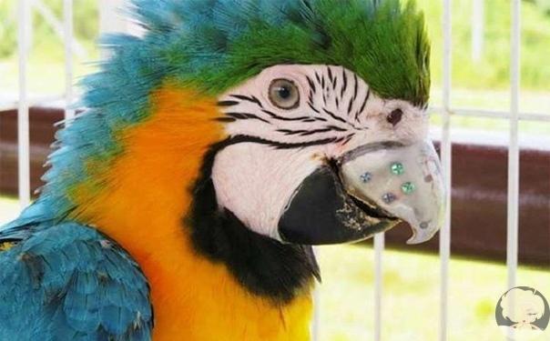 Чудесные истории спасенных животных