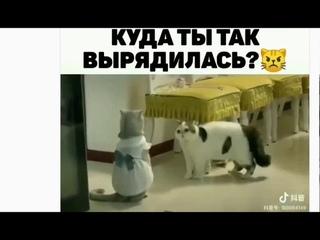 Семейные РАЗБОРКИ: сеанс ЮМОРОТЕРАПИИ !!!  Борис Биленко: тренер ЦиГун, развития СВЕРХ-СПОСОБНОСТЕЙ.