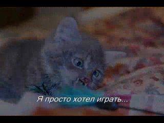 Страшная история про  катёнка Мышкина. Жестокие люди вырезали у него нос и губки.если вам жалко котёнка добавте себе это видео.
