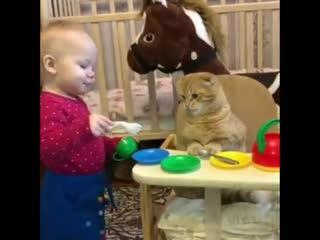 Кот с такой надеждой смотрит на вилочку