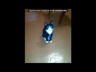 «Зверьё моё.» под музыку Песенка для котэ.Слушать всем!!!))) - Ты мой миленький, хорошенький, мой котик. Положу тебе сарделечку я в ротик. Положу тебе колбаску и сосиску. Молока налью тебе большую миску. Ты покушай, мой котенок, хорошенько. У тебя такая тоненькая шейка. Надо много кушать, надо много спать.... Picrolla