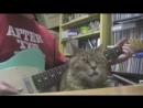 Самый невозмутимый кот
