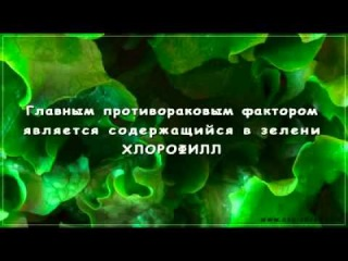 Жидкий Хлорофилл (Liqiud Chlorophyll) - жемчужина NSP