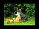 Битва котів
