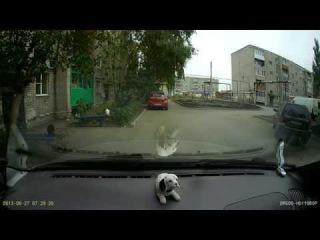 """Авито АВТО. """"Кот решил прогуляться..."""""""