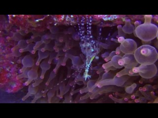 Misool Eco Resort Raja Ampat diving 2014 Indonesia