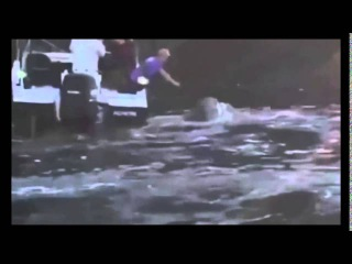 Горбатый кит попросил помощи у рыбаков