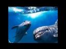 Звуки моря шум волн ☯ Голоса дельфинов Дао моря ☯ Лучшая Музыка Души для отдыха ॐ