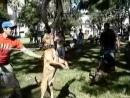 Чемпион мира по собачьим боям дикий мир и поведение животных в нем