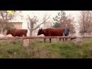 Прекрасная мелодрама о деревенской жизни - Карнавал по-нашему 2014! Смотреть мелодрамы про деревню