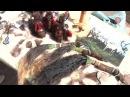 Кочевье 2016 Якутян поздравила председатель ассоциации Аборигенка Ия Герес