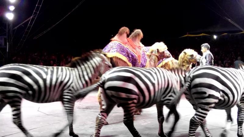 Цирк Кобзов 2016 на сцене Зебры и Верблюды