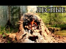Печь - щепочница из глины Ракета
