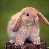 ★♥Пухлый кролик♥★